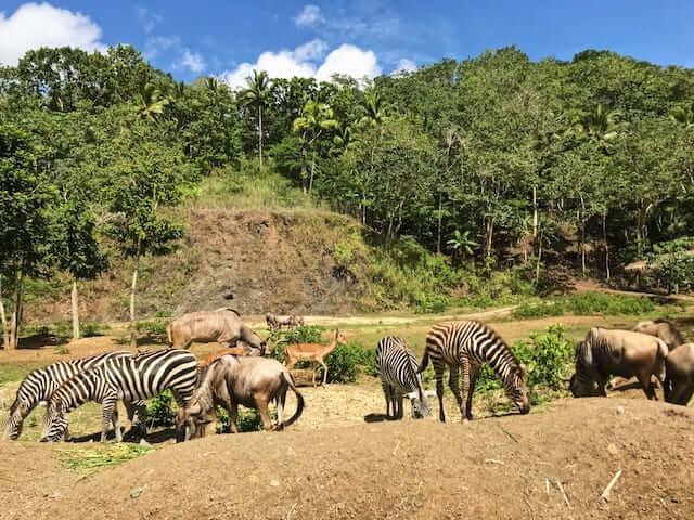 セブサファリ&アドベンチャーパーク完全ガイド【セブ島の動物園