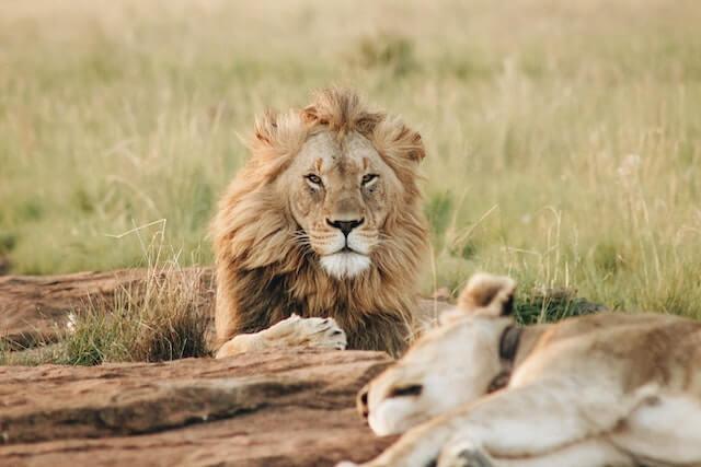 セブサファリ&アドベンチャーパーク完全ガイド【セブ島の動物園】