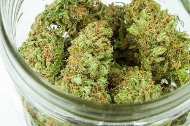 フィリピンの医療大麻とリアルな大麻事情【メディカルマリファナ】