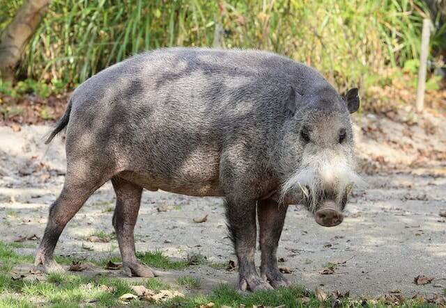 フィリピンの動物9選【珍しいユニークな絶滅危惧種まとめ】