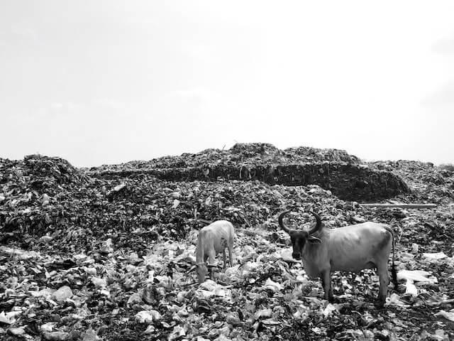 フィリピンのゴミ山『スモーキーマウンテン』【カオス画像注意】