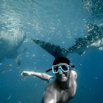 フィリピンでジンベイザメと泳げる人気の場所6選まとめ